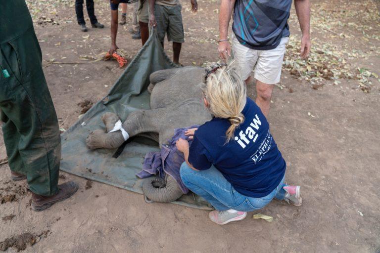 volunteers rescuing an animal