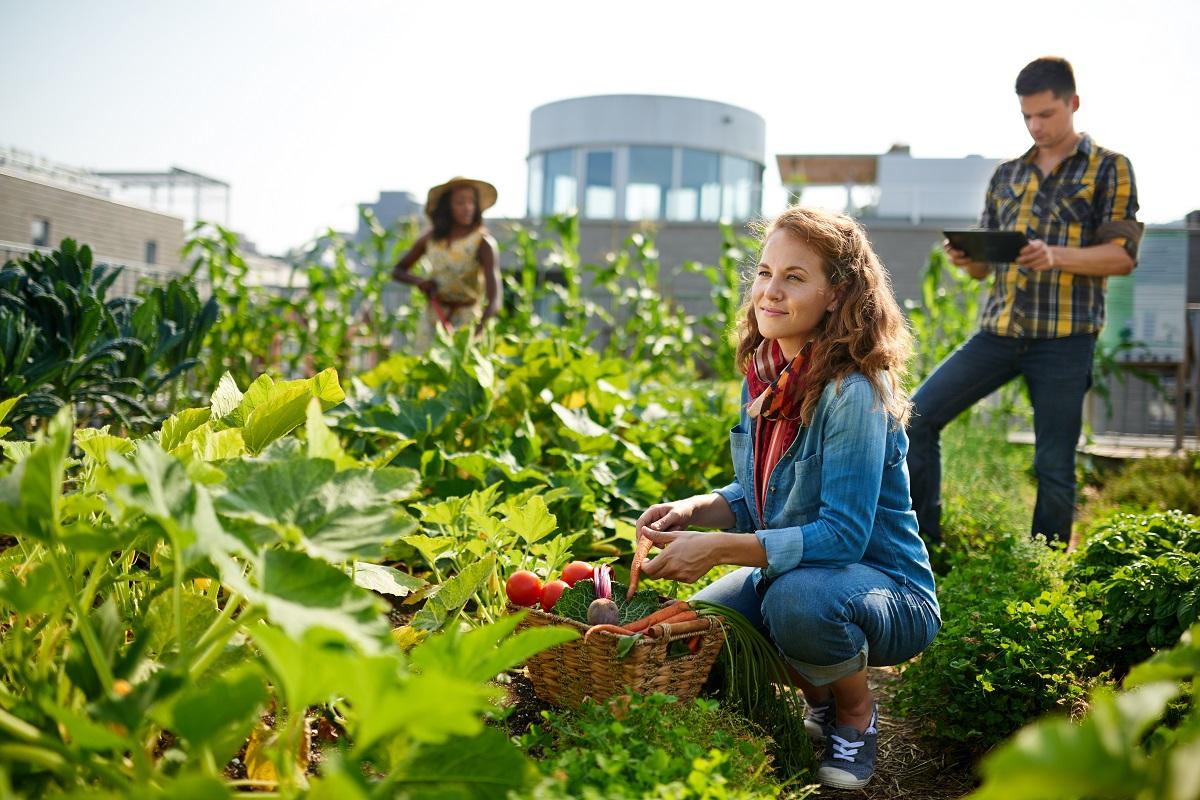 rooftop vegetable garden